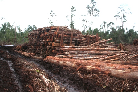 Logs from Peatland